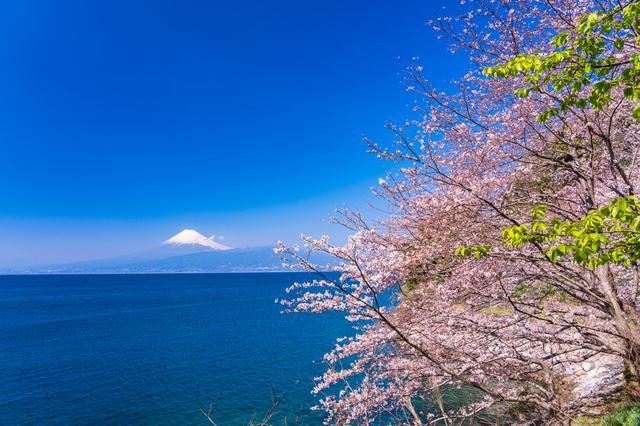 桜、春海、星座...「みずみずしい」春の俳句の魅力を解説!