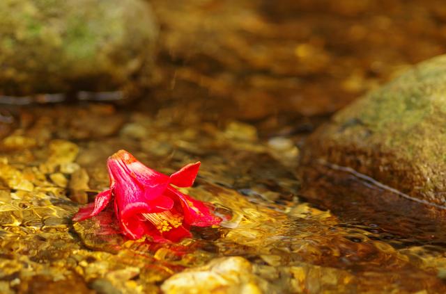 「落ち椿呑まんと渦の来ては去る」/井上弘美先生と句から学ぶ俳句
