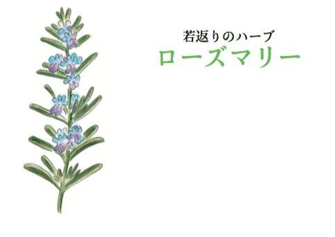 花壇・寄せ植えなどに。お勧めハーブベスト5