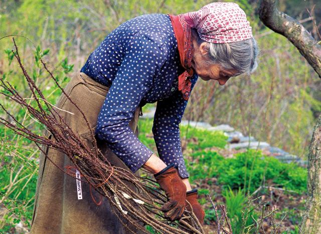 庭仕事が楽しい季節。ターシャの庭を夢見ながら、ガーデニングノートを付けてみませんか?