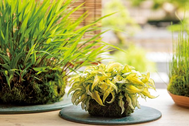 部屋に涼を呼ぶ。作って、飾って楽しい「草もの盆栽」の魅力