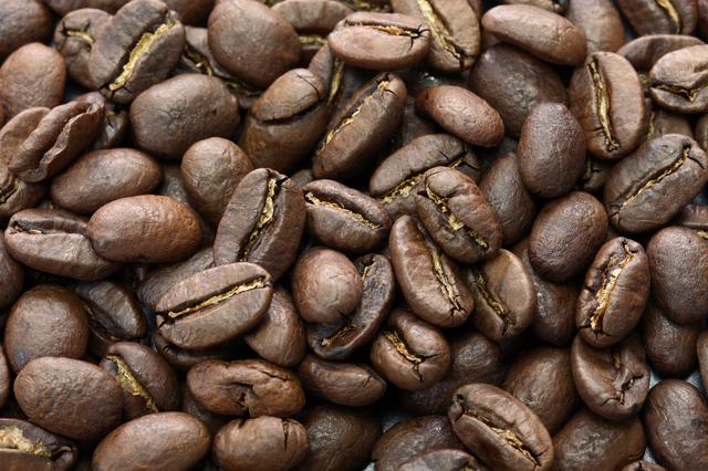 ネコのウンチから生まれた世界最高級のコーヒー/地球の雑学