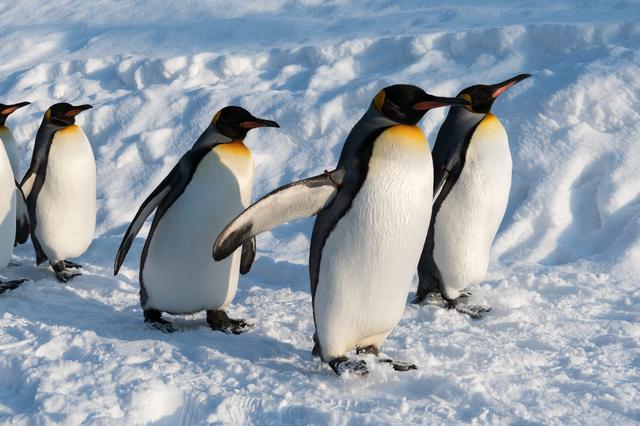 ペンギンはなぜ北極にいないのか/地球の雑学