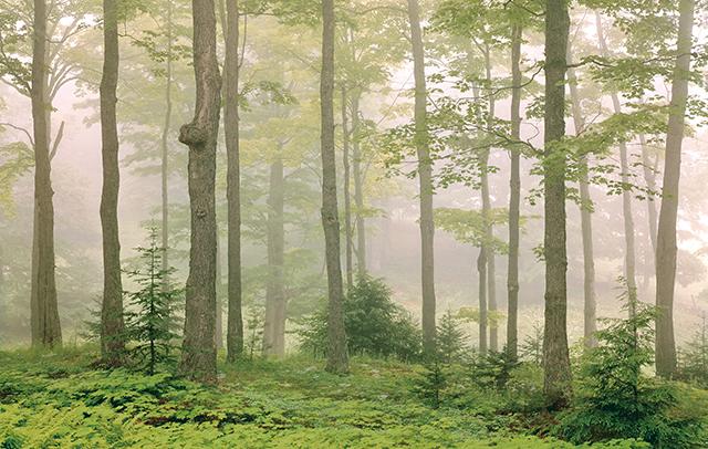 朝もやに包まれた幻想的なメープル林...写真家の美しい写真で見る「アメリカの田舎」の夏景色