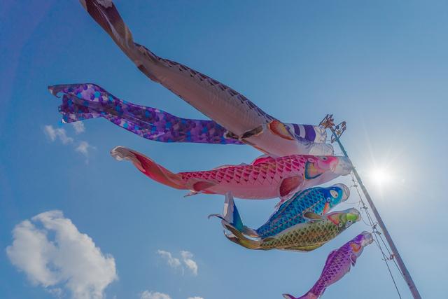 「鯉幟ゆらりと白き腹を見せ」/井上弘美先生と句から学ぶ俳句