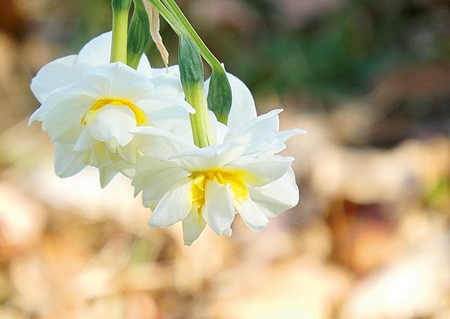 「撮る角度で雰囲気をチェンジ!」/プロが教える「花の写真」のコツ/花の写真のコツ