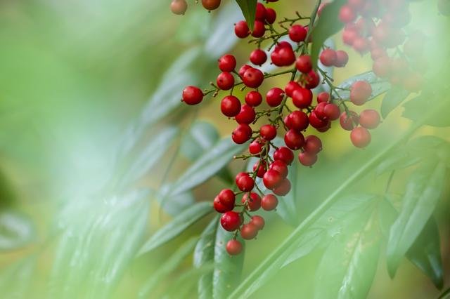 木の実や霜除・・・11月を楽しむ俳句/井上弘美先生「俳句のじかん」