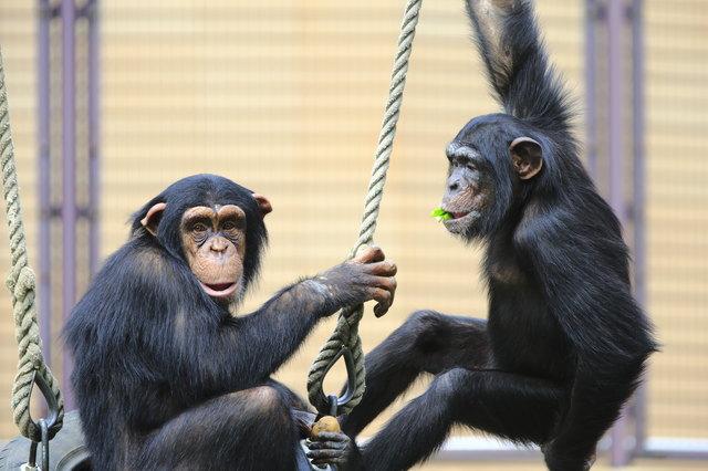 サルはいずれ人間に進化するのか/地球の雑学