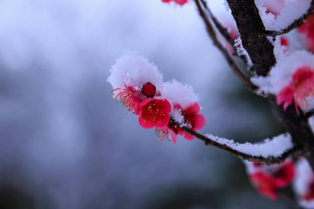 「春雪三日祭の如く過ぎにけり」春の訪れを読む/井上弘美先生と句から学ぶ俳句
