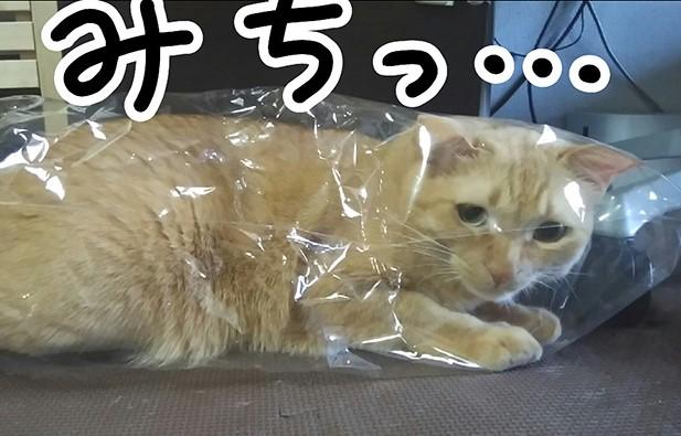 こんな小さなビニール袋に入って...そむ、大丈夫なの⁉/タレ目猫そむ(3)