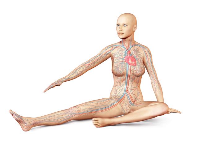 人間の血管をつなげると地球を2周半する長さになる!/地球の雑学