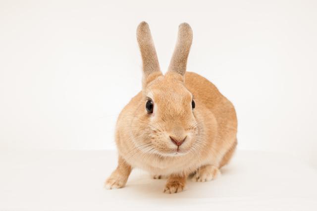 ウサギが自分のウンチを食べる合理的な理由/地球の雑学