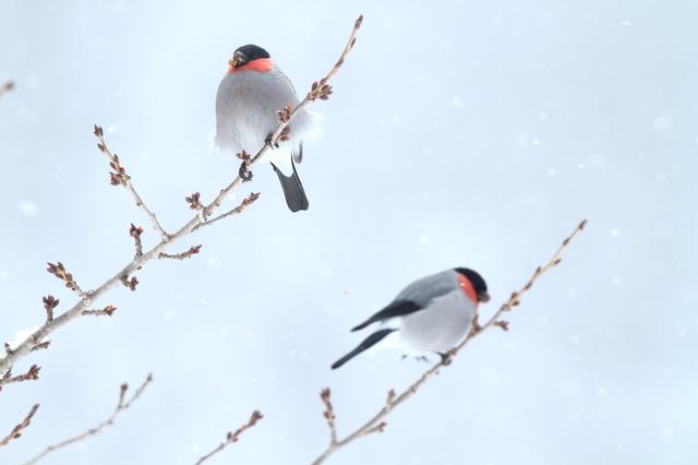 身のうちに心音ふたつ冬木の芽/井上弘美先生と句から学ぶ俳句