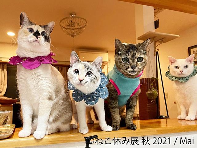 猫の愛らしすぎる写真に悶絶! 「ねこ休み展」に見る