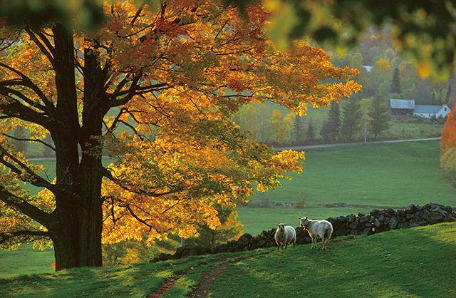 世界一の紅葉だ...75歳写真家が伝えたい「バーモントの秋」/バーモントの片隅に暮らす(8)