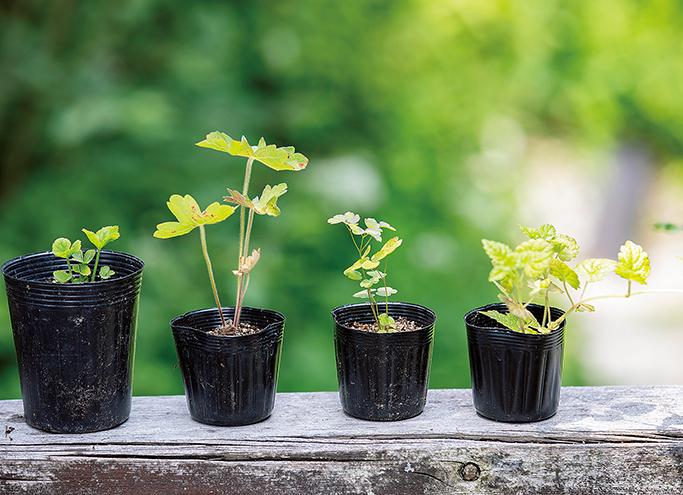 「種まきは、自然への恩返し」イギリス人ガーデナーが教える植物を育てる楽しさ