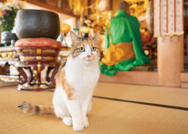 ありがたや~! お寺に暮らす猫たち「てらねこ」の日常生活をちょっとのぞき見