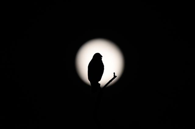 幻想的な夜の森に「アオバズク」の声が響く.../井上弘美先生と句から学ぶ俳句