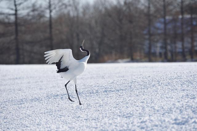 鳥のひざは人間とは逆に曲がっている!?/地球の雑学