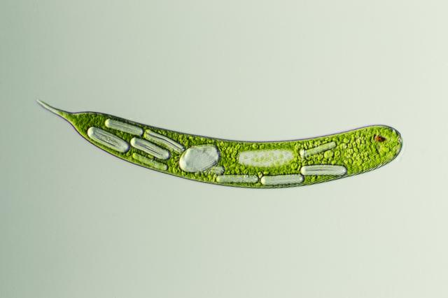 ヒトの起源は? 細菌たちが共生し合ってできた「合体生物」だった/身近な科学