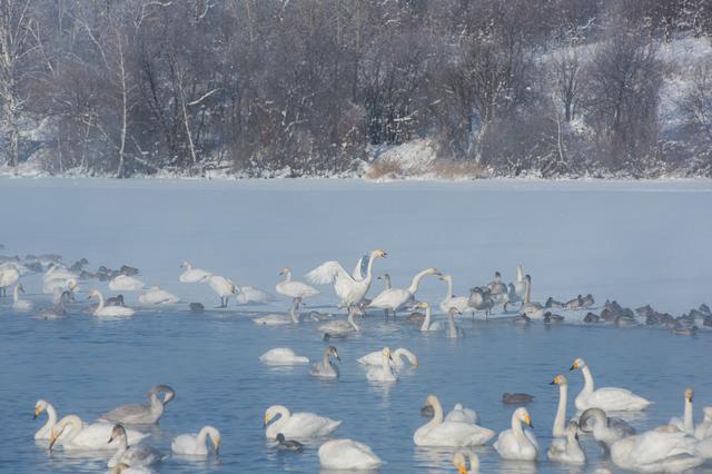 「雪つよくなれば水鳥沖をさし」井上弘美先生と句から学ぶ俳句