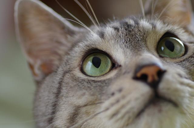 黄色や緑の「目やに」に注意して。自宅でできる「猫の目の健康チェック」/家ねこ大全(31)