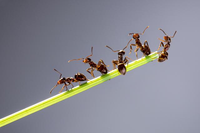アリ社会がうまく回っているのは、「働かない働きアリ」がいるからこそ/身近な科学