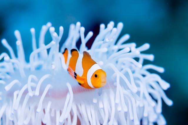オスからメスへ、メスからオスへ性転換する魚がいる!/地球の雑学