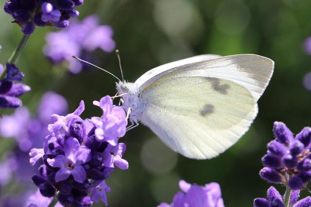 地球でもっとも繁栄している生物は「昆虫」だってホント!?/地球の雑学