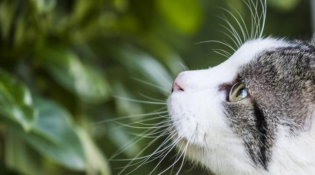 「猫は、落ち込まない」ってホント? ありのままで生きる猫たちが、教えてくれること