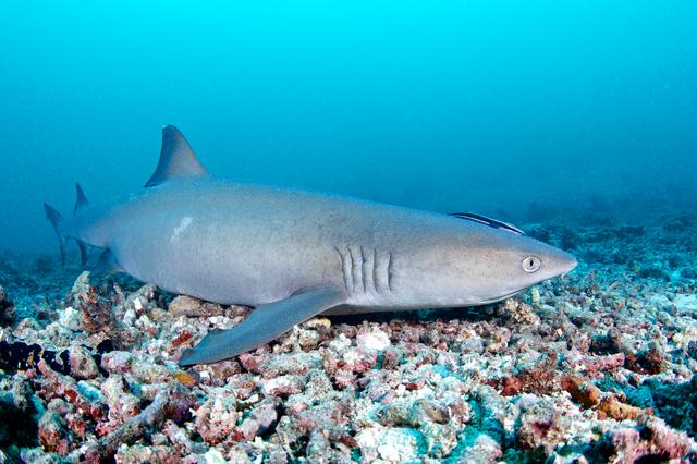 世界一のろまなサメが世界一長寿の脊椎動物だった !/地球の雑学
