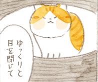 「親愛の証」ゆっくりまばたきをすると猫もまばたきで返す?/ねことじいちゃん(第78回)