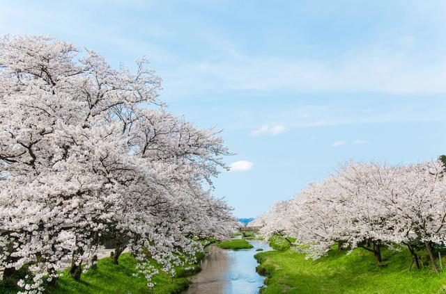 「さまざまの事思ひ出す桜かな」/井上弘美先生と句から学ぶ俳句