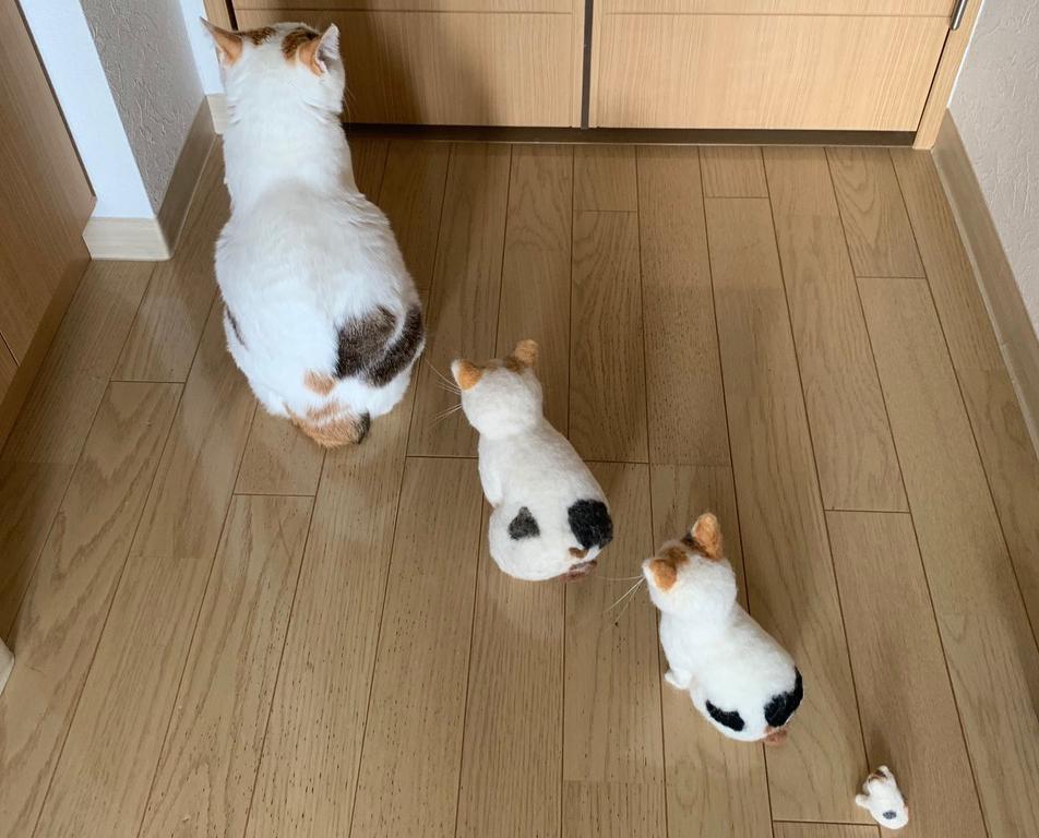 表情豊かな三毛猫マルちゃん。保護猫を迎える幸せな生活/猫の写真と、猫との暮らし。
