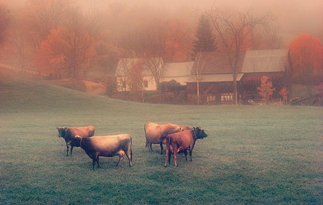 ターシャ・テューダーが愛した写真家が見つめた「アメリカの昔ながらの暮らし」/バーモントの片隅に暮らす(10)