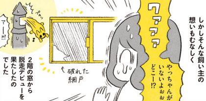 まさかのやっちゃんが脱走!!心臓が止まるかと思った.../茶トラのやっちゃん(11)