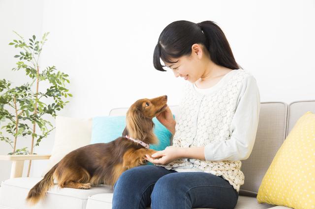 世界初のロール式犬トイレって? 最新ペット用品はこんなに便利