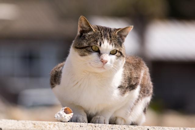 野良猫に餌をあげないで!近隣住人の無責任な「餌やり」問題