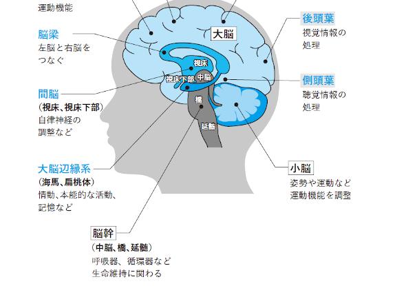 あなたの脳、本当は天才レベル!? うまく使うために必要なのはメンテナンス