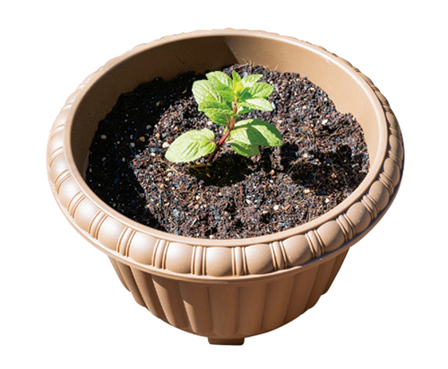 調理に使わない野菜の根っこや小枝で自家製の苗ができる! 100円ショップでそろえて「プランター菜園」