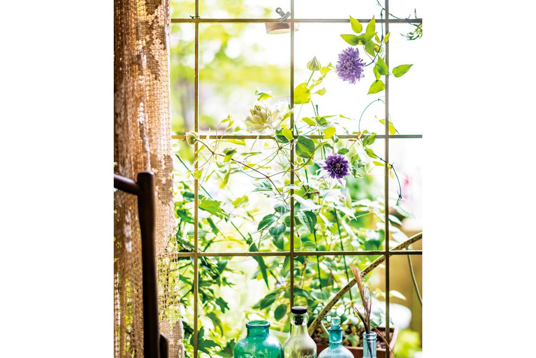 天気のいい日のお楽しみ♪ 人気ガーデナーの「クレマチスのカーテン」/水谷昭美さんの暮らしの晴れ間