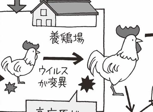 ヒトへの感染不安も!鳥インフルエンザ感染拡大/2004(平成16)【平成ピックアップ】