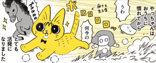0歳ネコの無限体力...!おてんばやっちゃんへの苦肉の策とは/茶トラのやっちゃん(6)