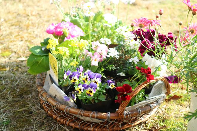 私の春支度~花やグリーンのある暮らし~/tommy