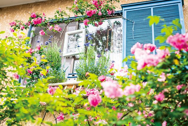 冬に置いた窓辺の巣箱。ある日カタンカタンと音がして.../水谷昭美さんの暮らしの晴れ間