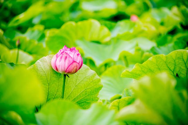 心穏やかになる「仏教」の教え。平家物語でお馴染み「諸行無常」の意味をご存じですか?
