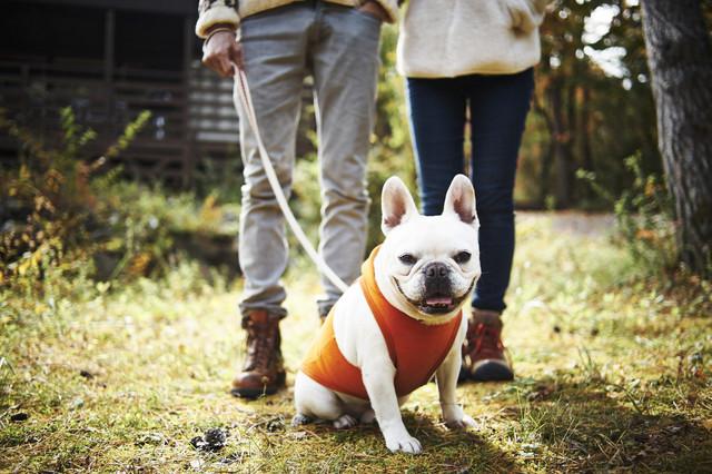 災害が起きたら、ペットも避難所に同行すべき? ペットの防災対策を考えよう