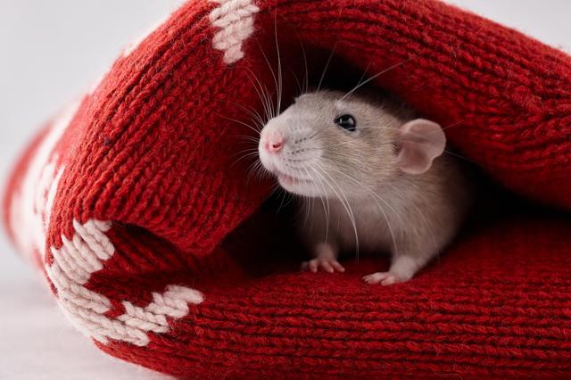 「逃げ道のあるネズミは世界最弱」言いわけをして自分を弱くしない考え方