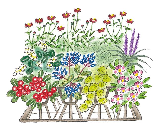 実のなる植物が大活躍! 秋冬の寄せ植えの楽しみ方